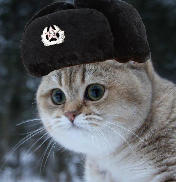 Cat In A Hat In Russian