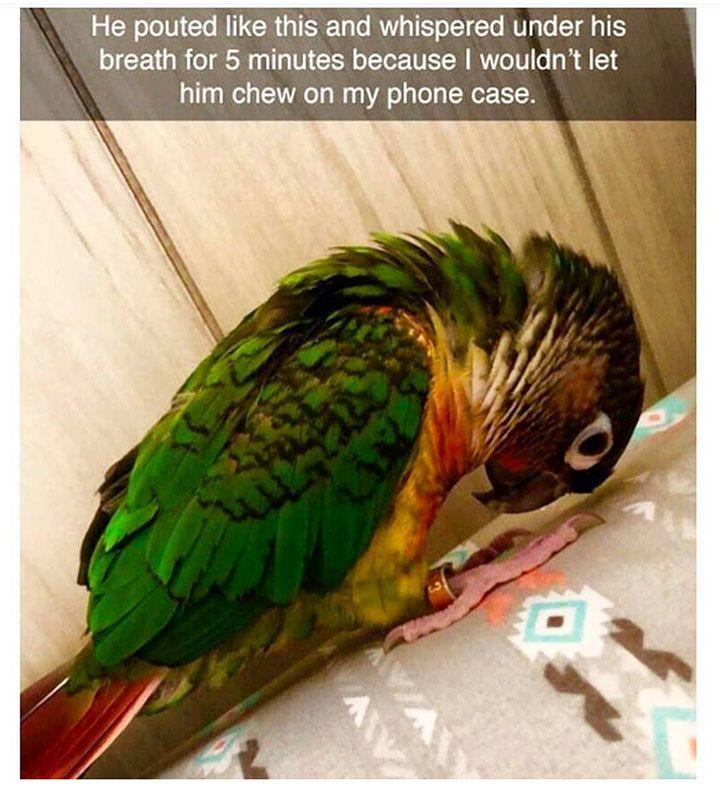 Justviral Net Find Viral Images Online Cute Animal Pictures Cute Animals Cute Funny Animals