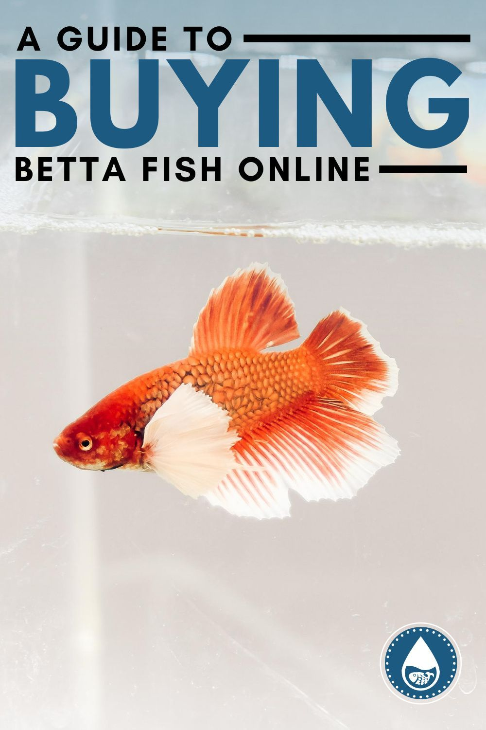 A Guide To Buying Betta Fish Online In 2020 Betta Fish Betta Fish