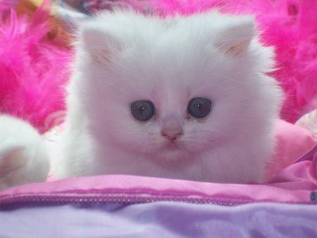 Kitten Cats Wallpaper 207454 Desktop Nexus Animals Kitten Wallpaper Kittens Cutest Baby Cats