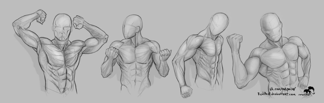 Study shoulders hands torso by RedBast | Sketches and Anatomy ...