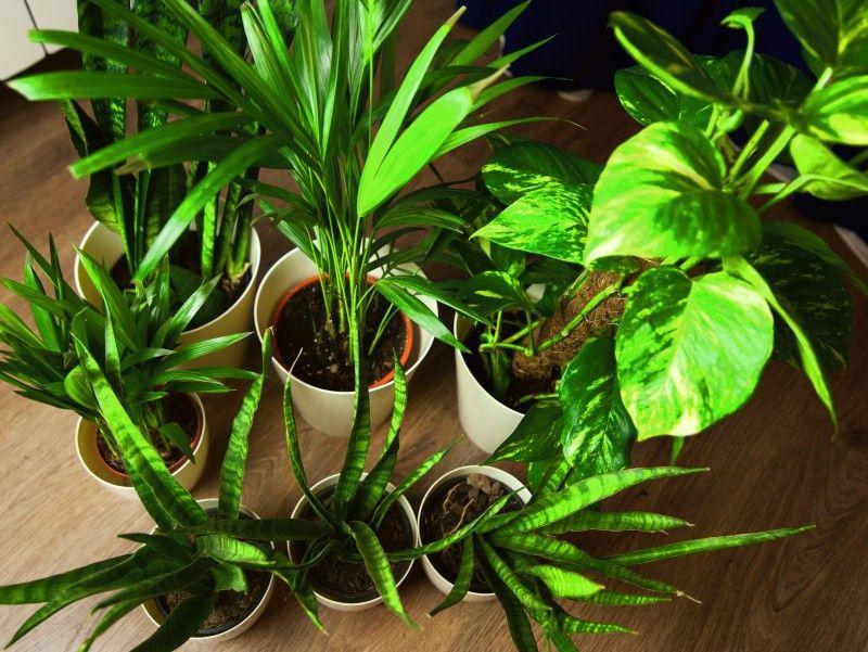 Smog Cie Przesladuje Oczysc Powietrze W Domu Roslinami Plants Closer To Nature Garden