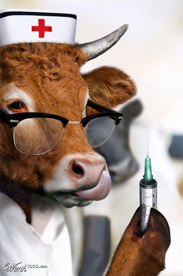 Прекрасных, прикольная картинка врач и животное