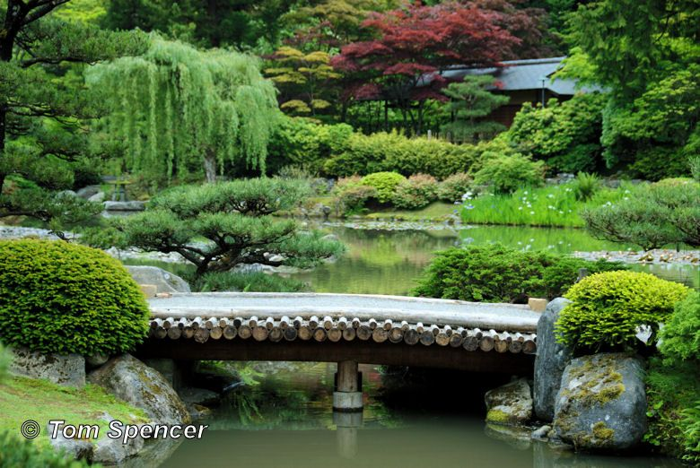 Japanese Pond with Bridge Water features add a peaceful sound to any yard  or garden