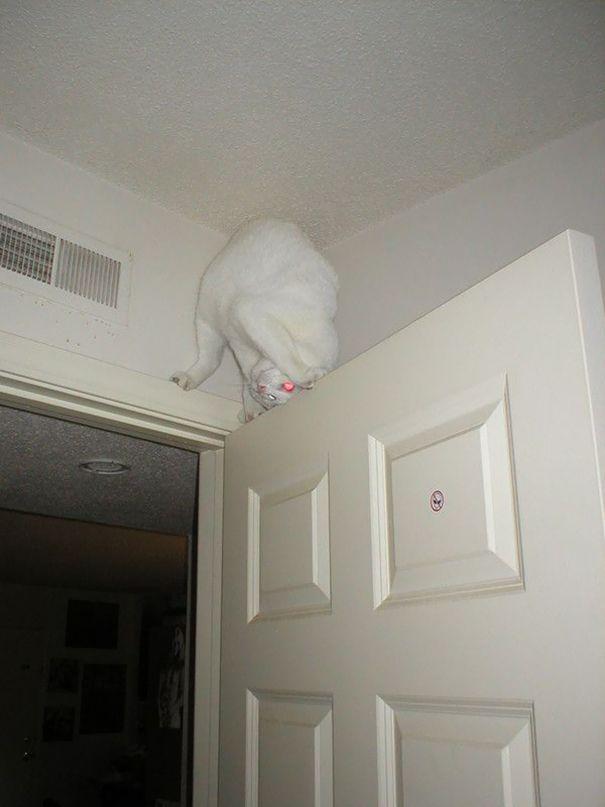 Gatos são ninjas