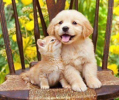 Pin on Cats & Dogs