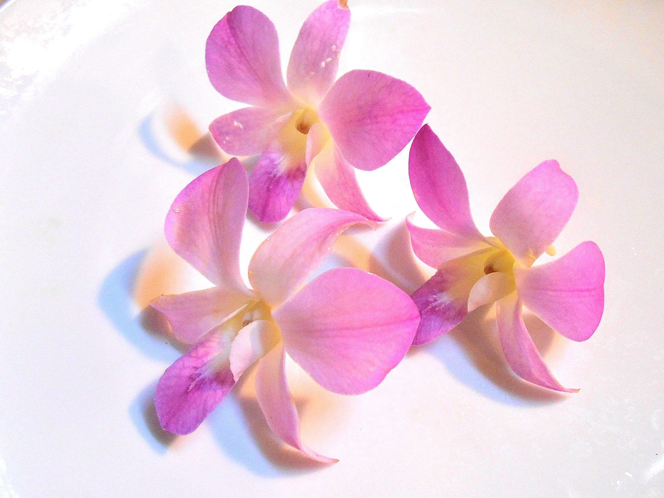 Organic Edible Orchids Gourmet Real Orchids Small Lavender Pink And White Shades Orchids Over Night Shipping Wedding Cakes Bulk 25 In 2020 Edible Flowers Orchids Fresh Flowers