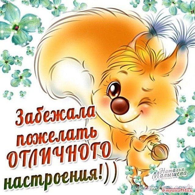 Картинки удачного, хорошего дня и настроения (52 открытки)   Открытки, Смешные открытки, Утренние цитаты