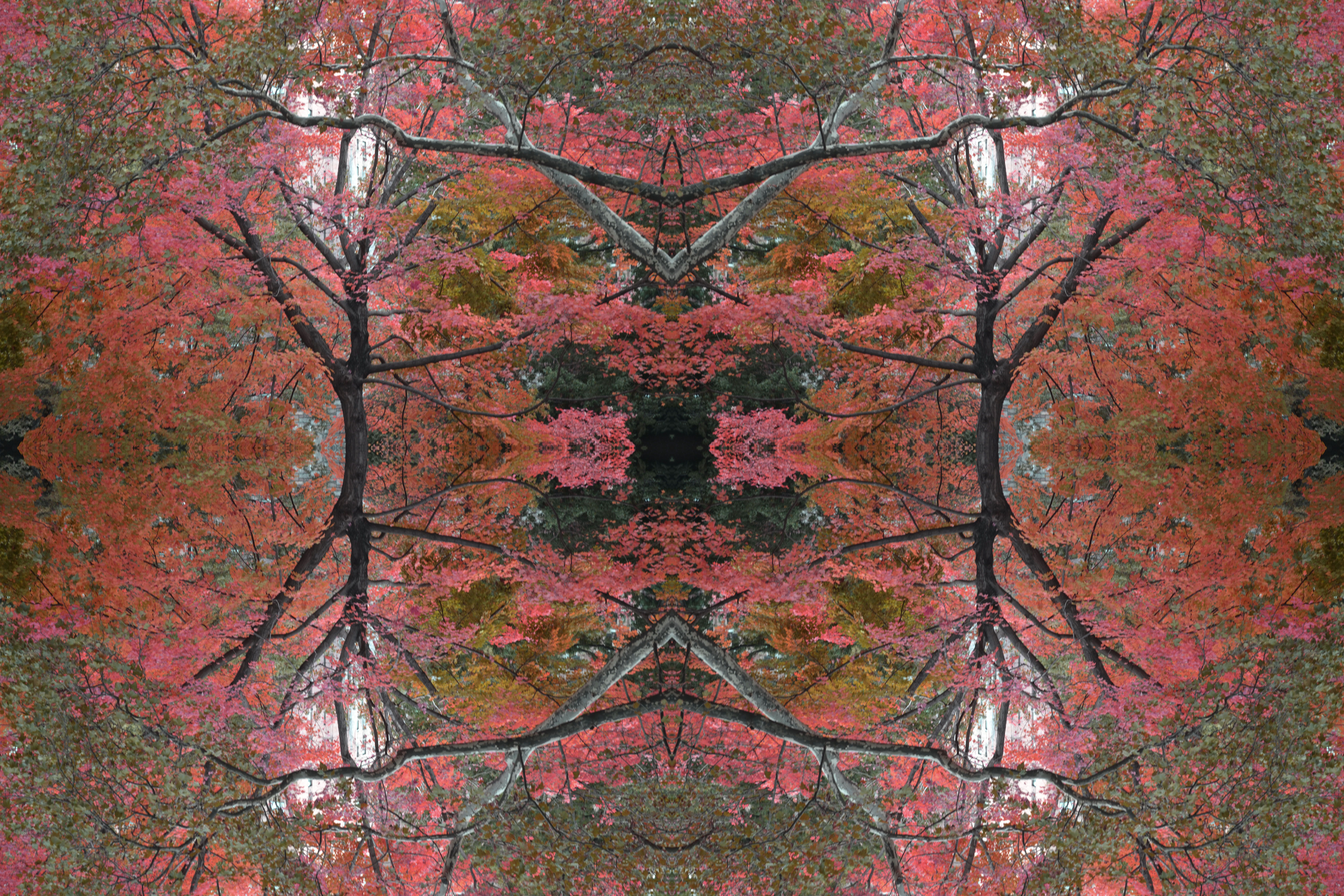 pink tree branches kaleidoscope trippy