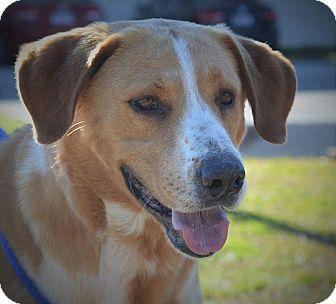 Wilmington Nc Retriever Unknown Type Hound Unknown Type Mix Meet Elvis A Dog For Adoption Pets Dog Adoption Kitten Adoption