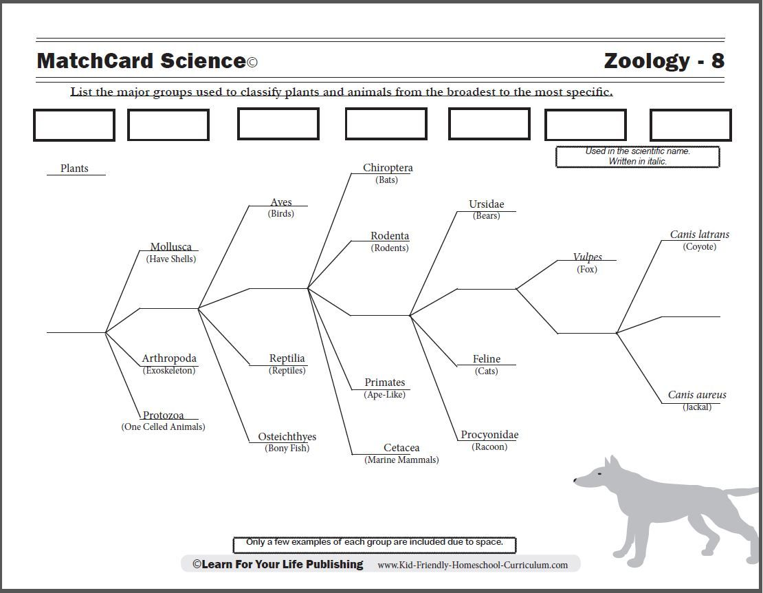 {Lesson plan Kids use the example of dogs to learn the scientific – Classification Worksheet Biology