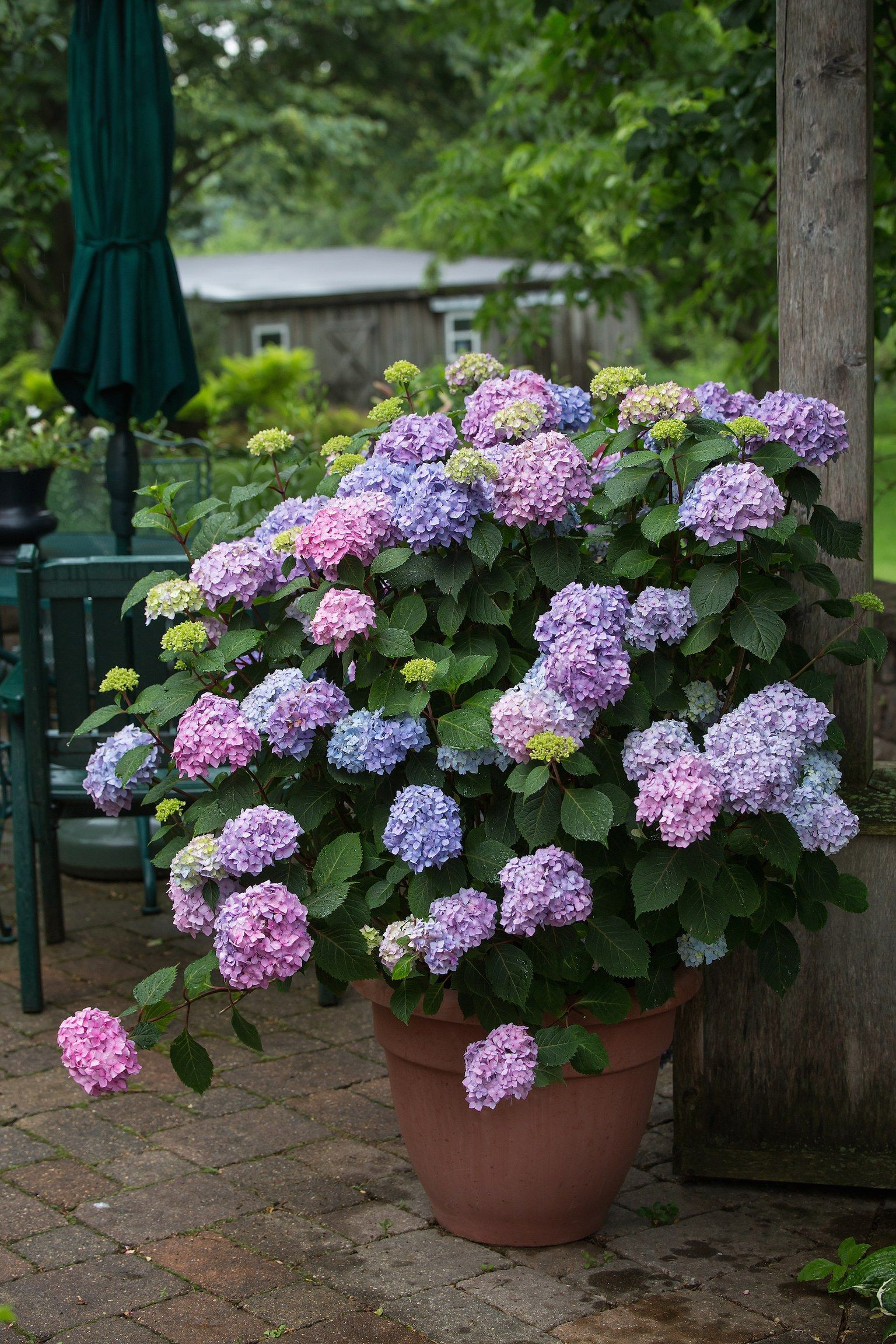 6 Plants You Can Surprisingly Grow In Pots Plants Growing Hydrangeas Container Gardening Flowers