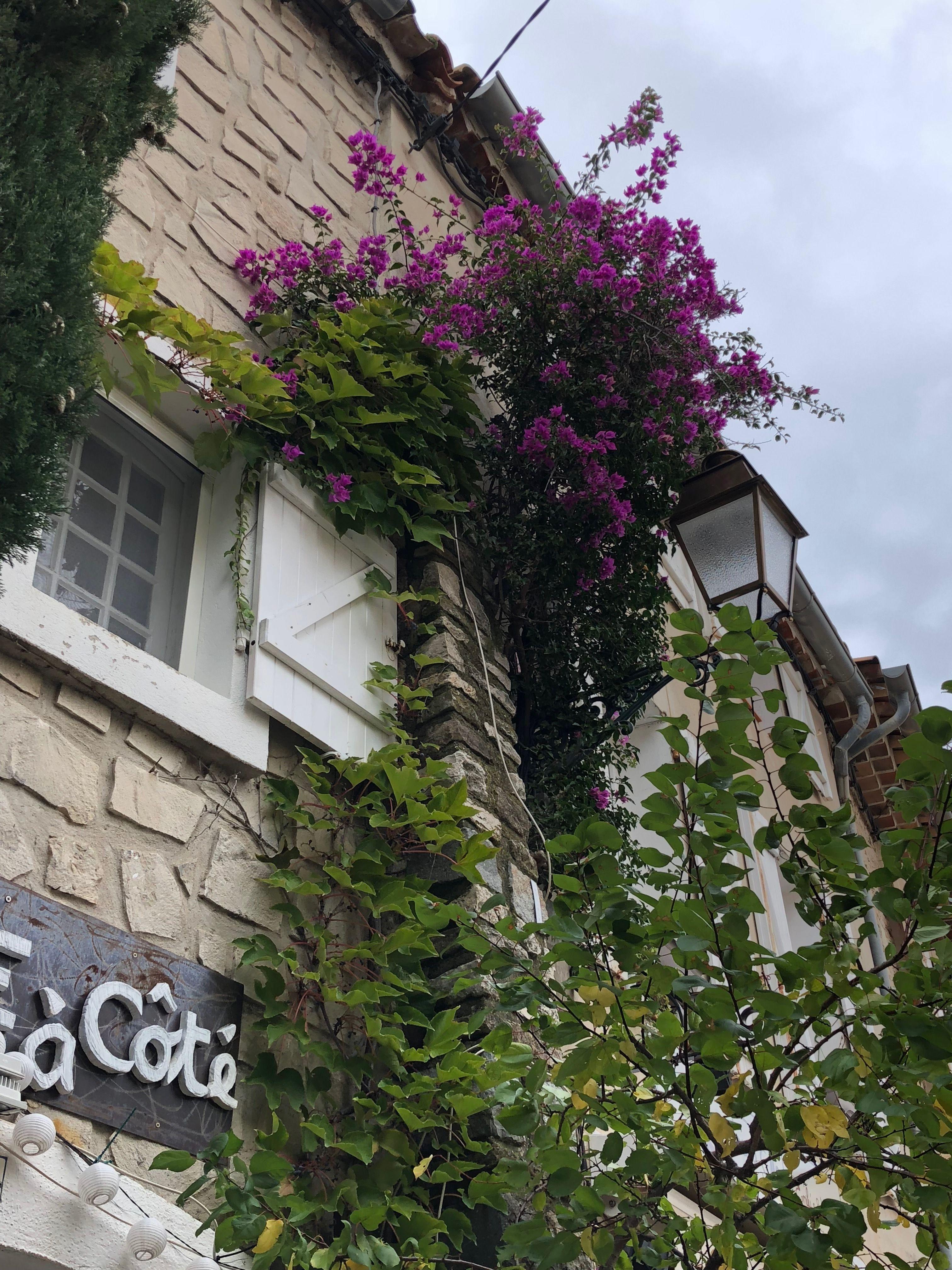 Le Castellet, France 2018 France travel, France, Plants