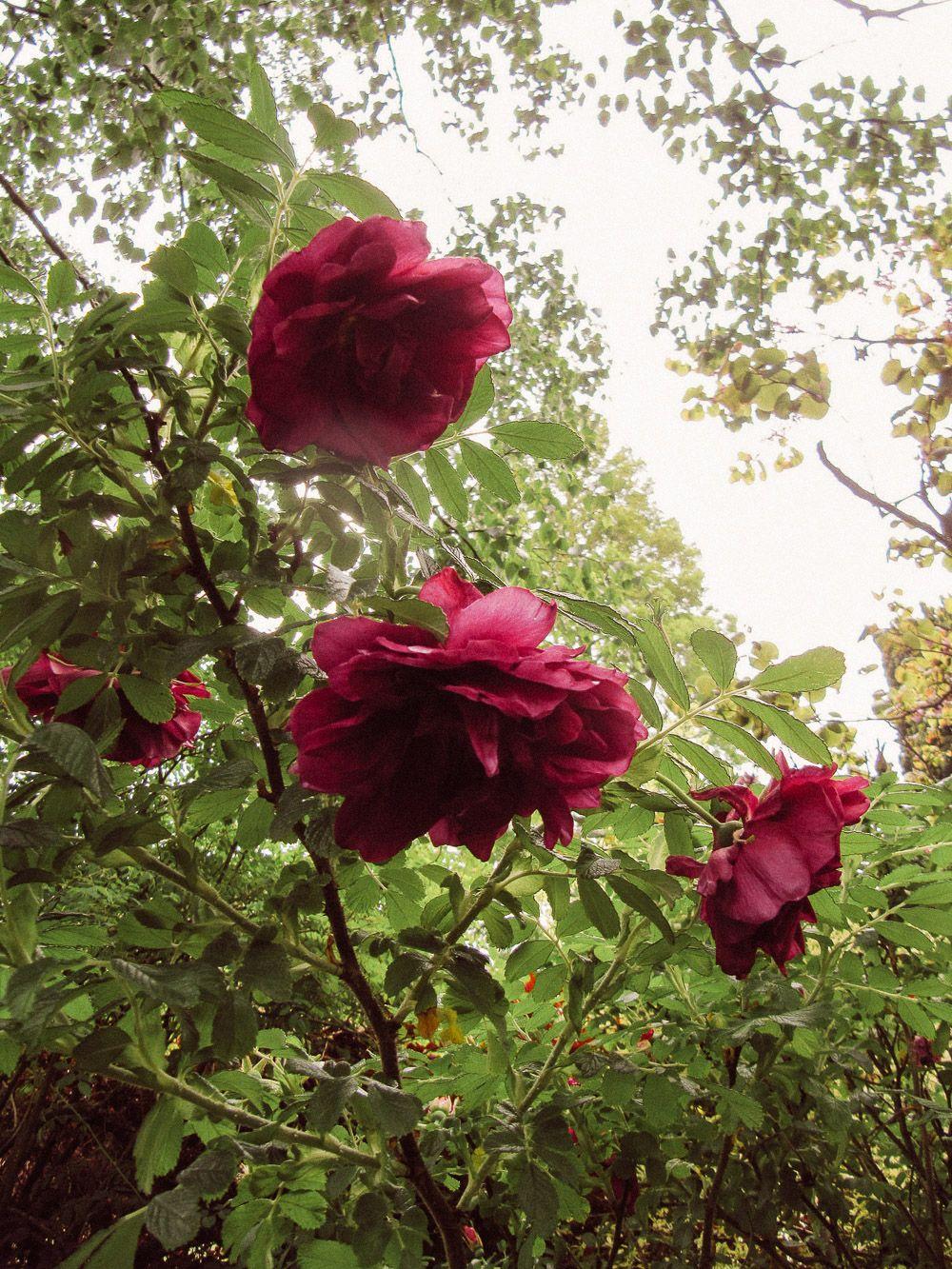 A Look at John Brookes' Denmans Garden | Most beautiful ...