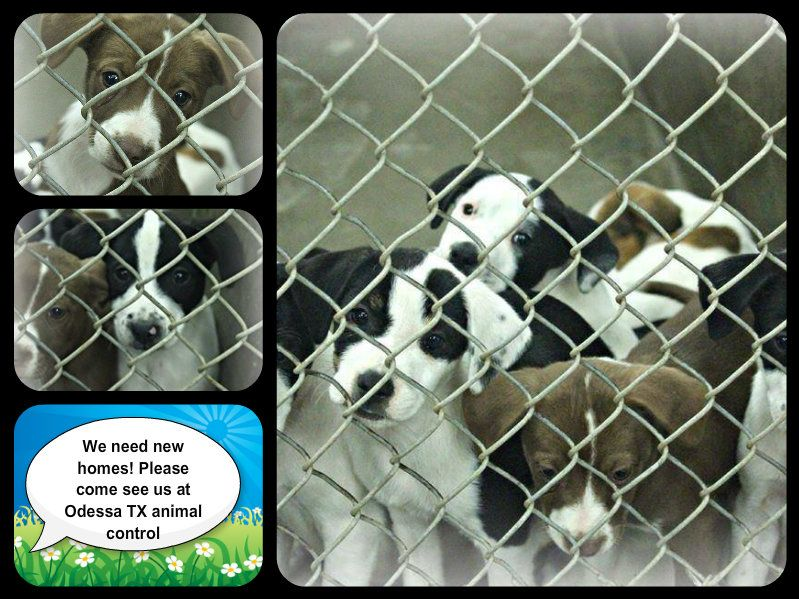 72114 ALL OF THESE PUPPIES NEED NEW HOMES OR A FOSTER