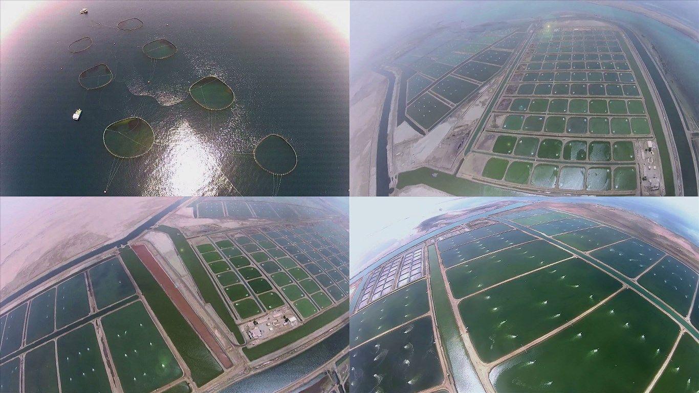 Largest aquaculture operation in the world... #Fish #Cages   #Shrimp on serbia farms, japan farms, uganda farms, swaziland farms, iran farms, ussr farms, liechtenstein farms, barbados farms, turkmenistan farms, sa farms, cyprus farms, belarus farms, asia farms, moldova farms, doha qatar farms, libya farms, falkland island farms, venezuela farms, pakistan farms, hawai farms,