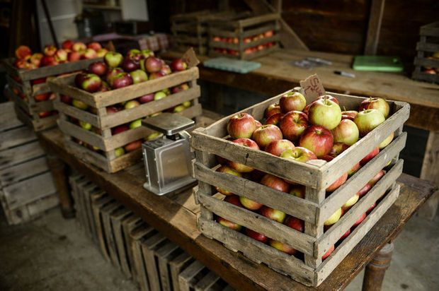 Jackson-area farms and orchards offer fun fall activities for the whole family | MLive.com