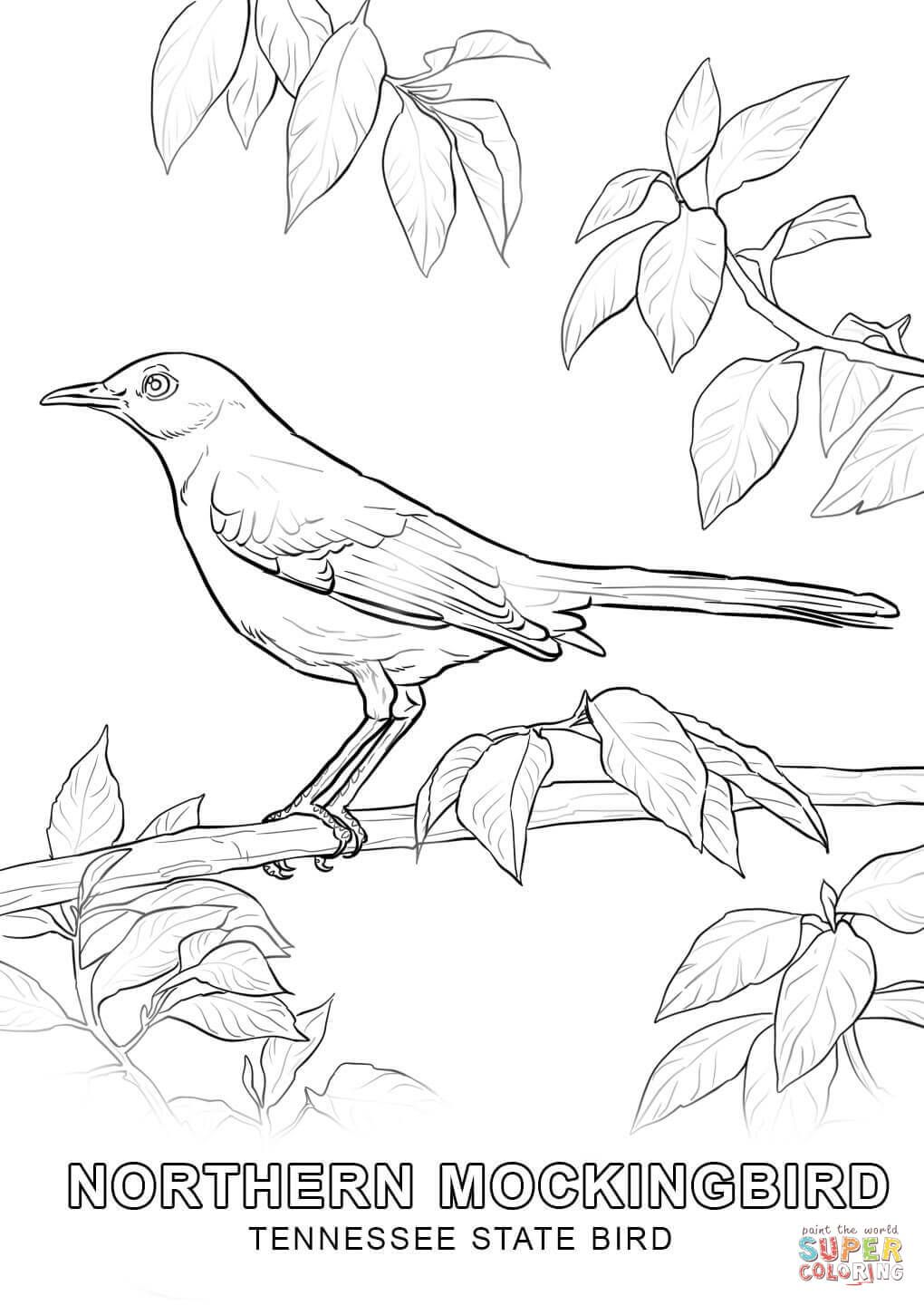 Tennessee State Bird Coloring Page Jpg 1020 1440 Bird Coloring