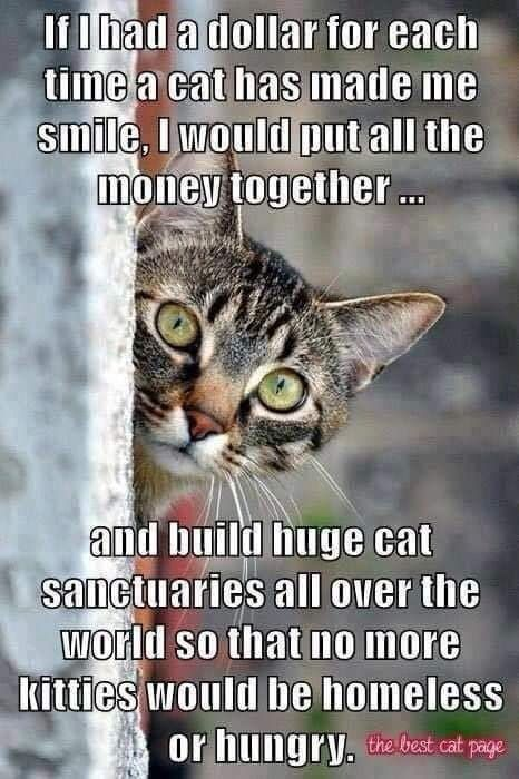 Pin By Tash S Attic Too On Cats And More Cats In 2020 Cats Cat Sanctuary Crazy Cats