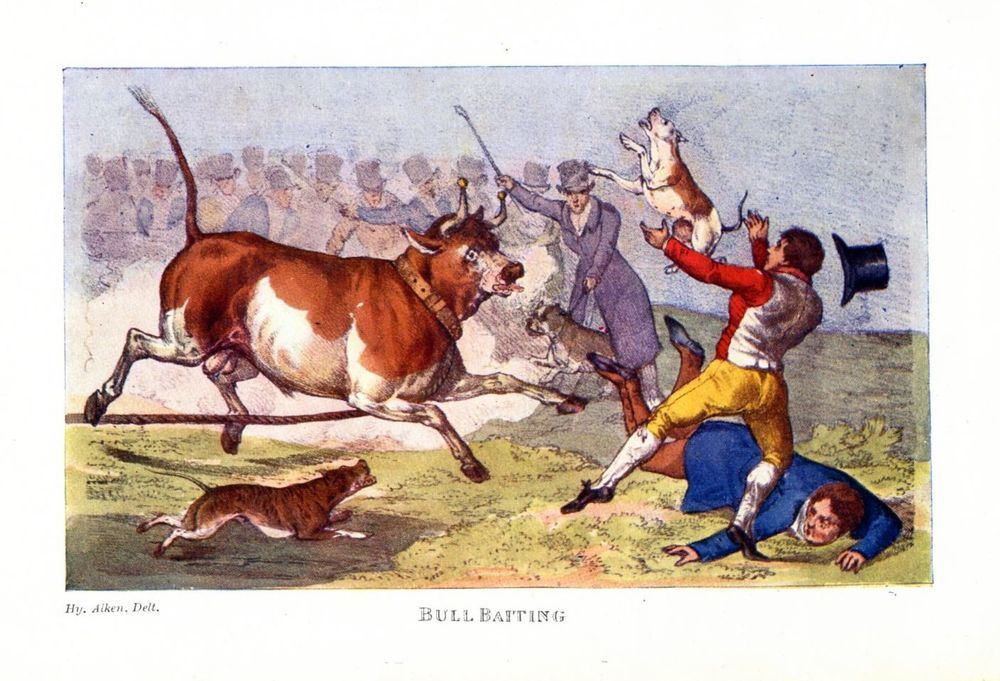 Bull Baiting With Dogs By Henry Alken