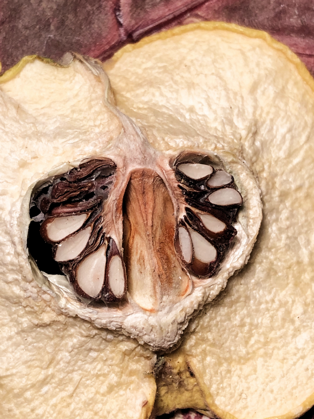 Quince fruit close up photography #quince #fruit #nature #naturephotography #natureart #natureaddict #photoshoot #photography #seed #seedscolor #closeup #microscopic #inside #interestingthings #interesting #fruit #middle