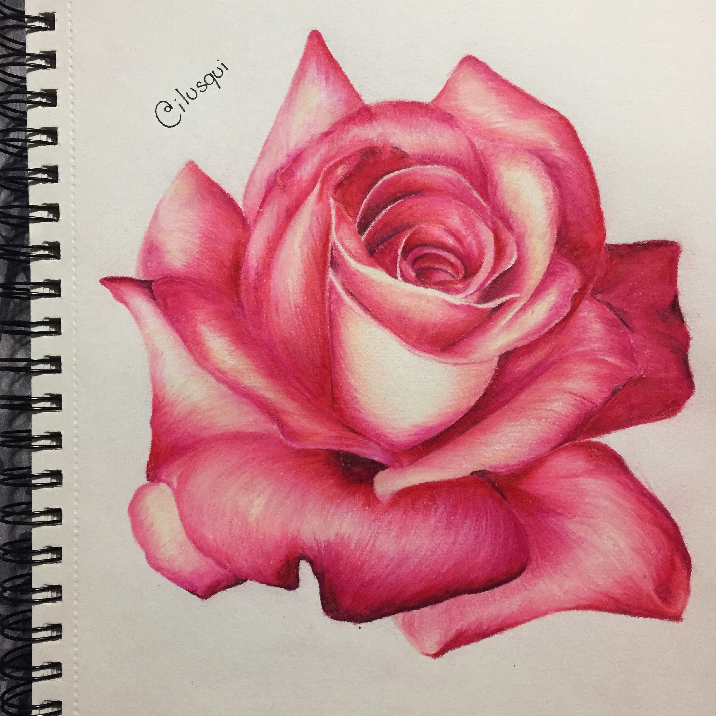 Gallery Roses Drawing Flower Drawing Flower Art