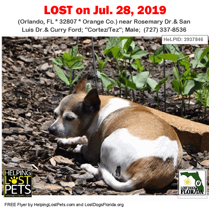 Lost Dog Have You Seen Cortez Tez Lostdog Cortez Tez