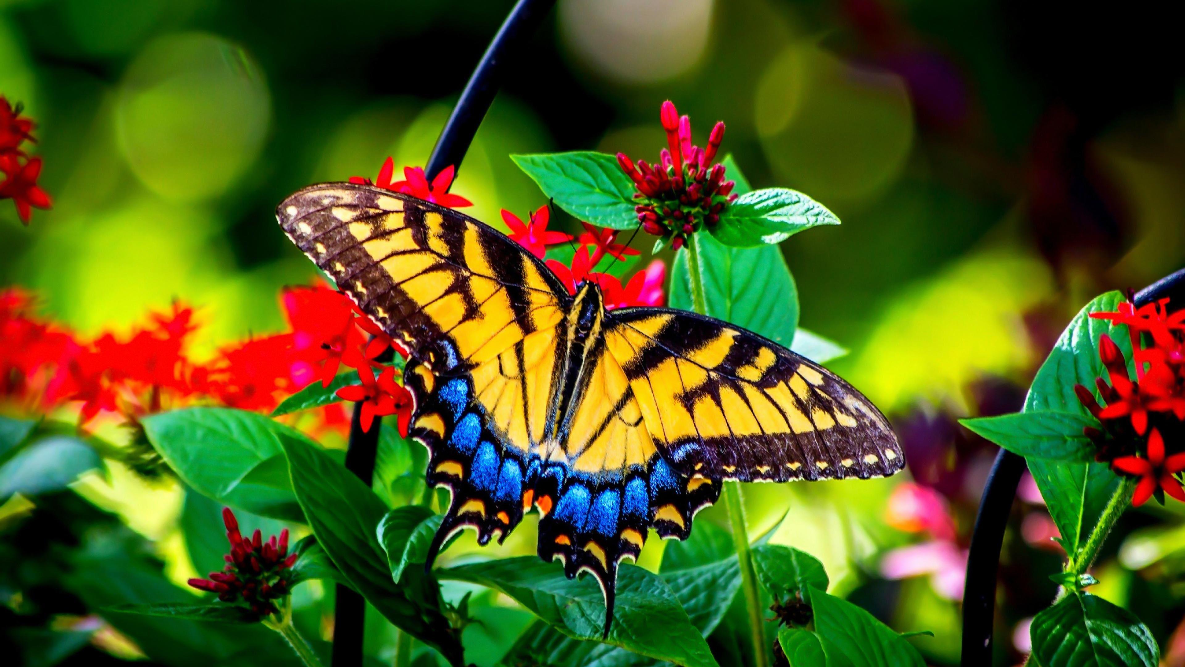 Butterfly In Garden HD Image
