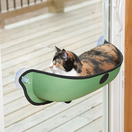 Removable Cat Window Bed What A Great Spot No Nap Or Watch Birds. These Beds  Just Suction Cup To Any Window And Can Hold Up To 28 Lbs Best Cat Bed!