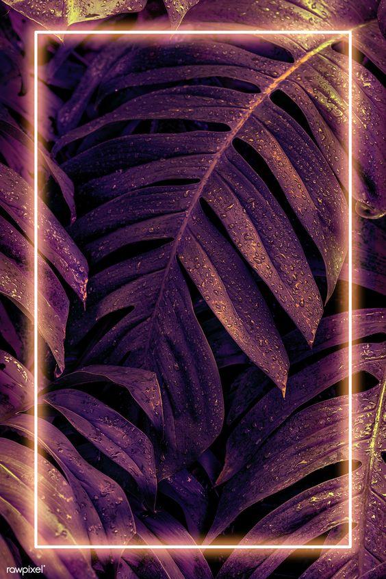 Papéis de parede roxo mais bonitos para celular - Quebrei a Regra