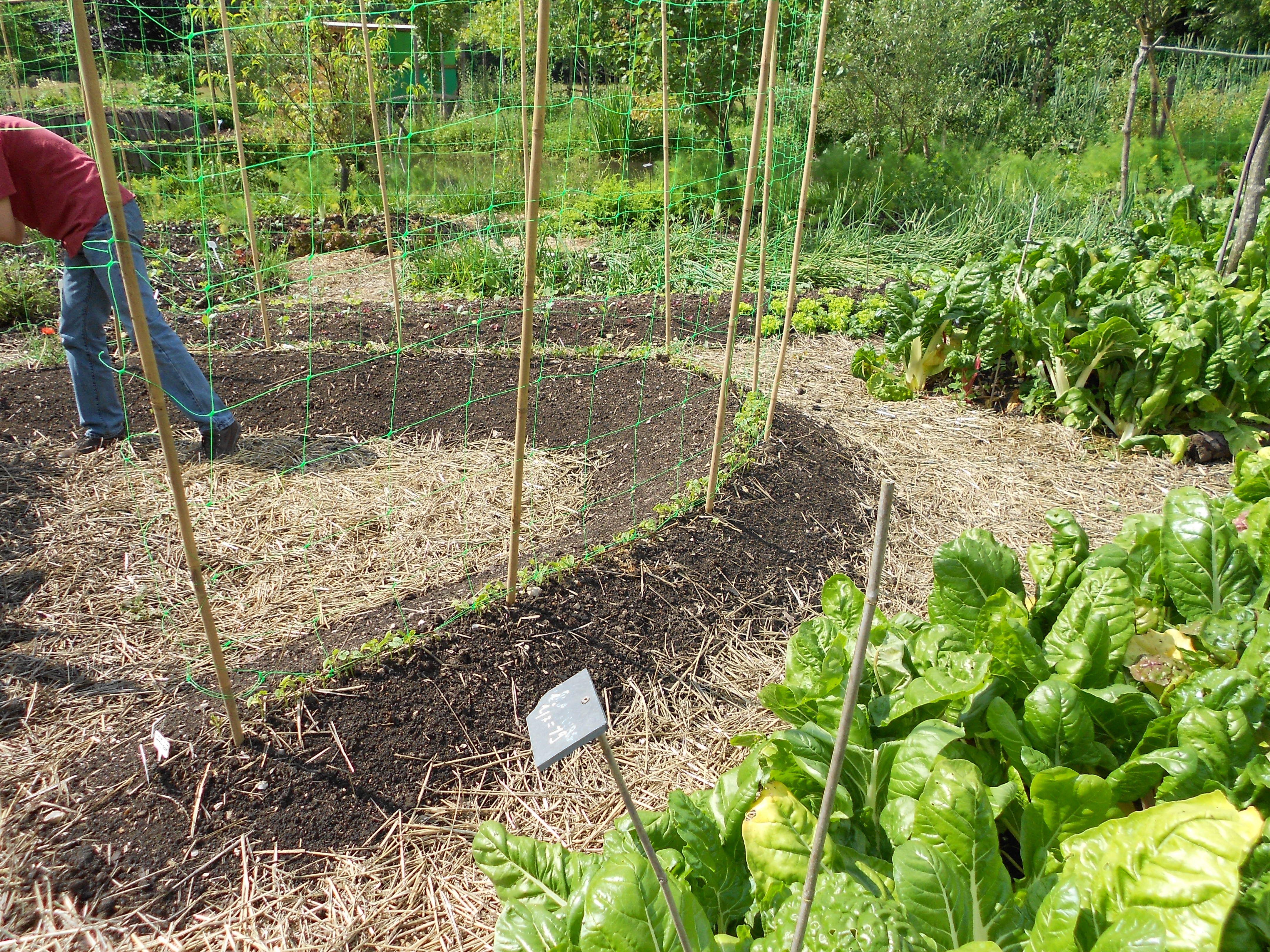 jardin potager mandala Recherche Google