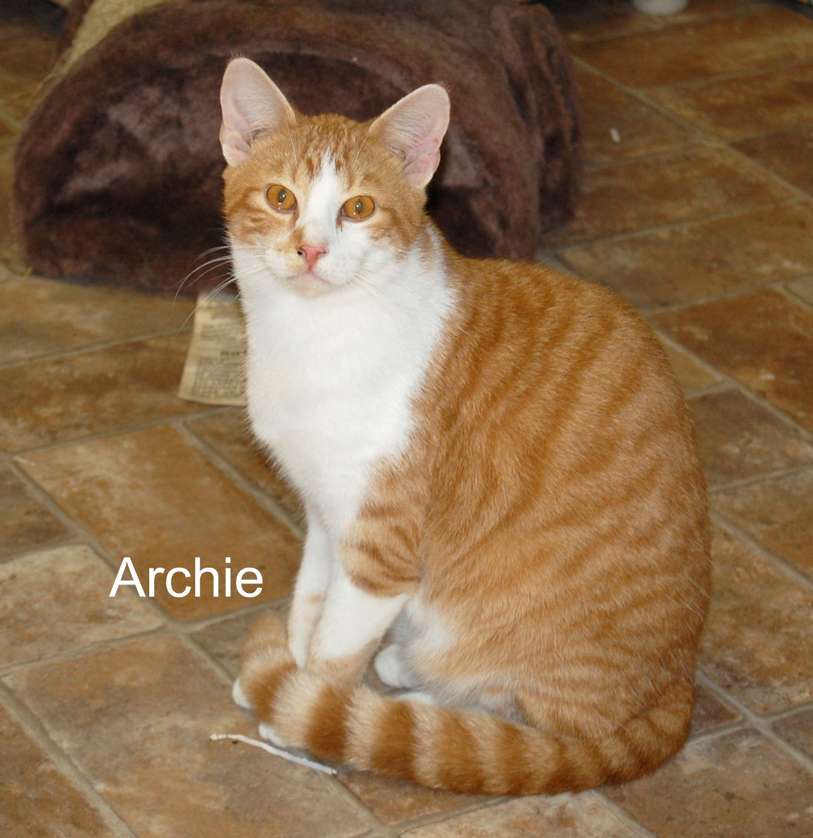 Adopt Archie on No kill animal shelter, Pet adoption