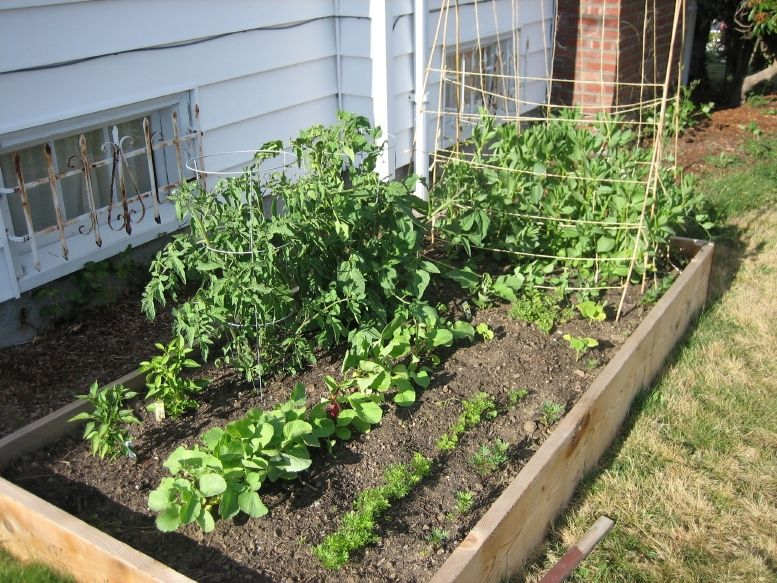 Easy vegetable home gardening ideas easy diy and crafts for Home vegetable garden ideas