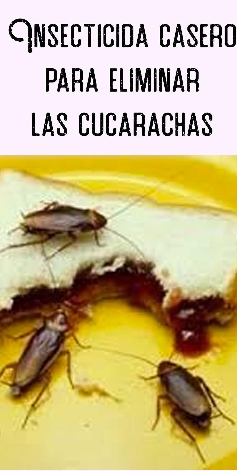 Como Acabar Con La Plaga De Cucarachas Chiquitas Pin En Insecticidas