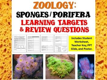 Zoology Phylum Porifera: Sponges Learning Targets and Review