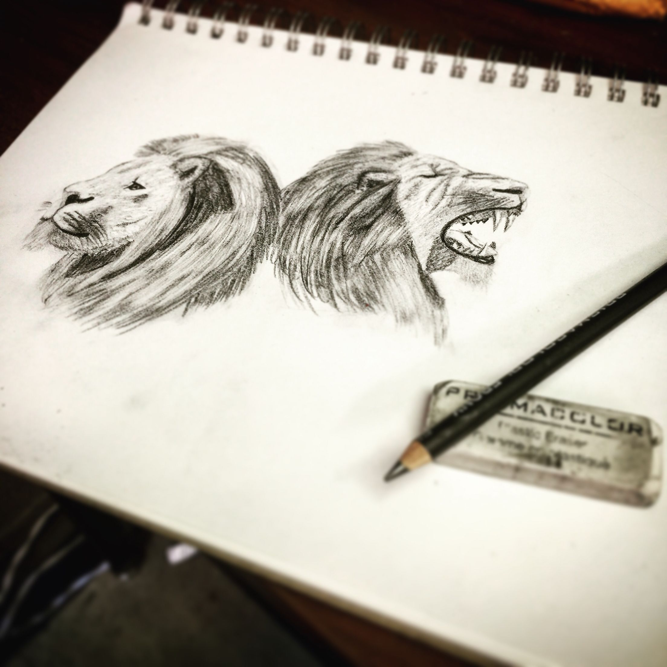Lions drawing sketching pencil color art fading shading lions roaring simba portrait animal
