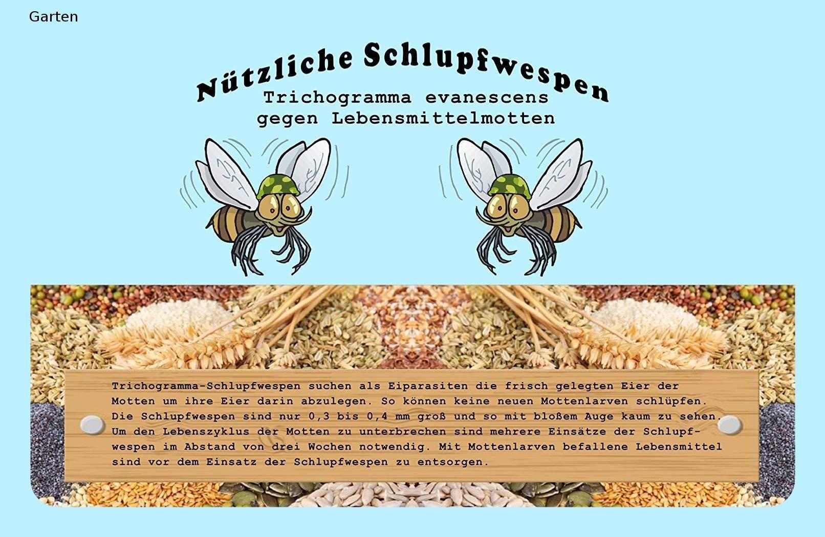 Vgo Schlupfwespen 6 Kartchen Mit Je 2000 Schlupfwespen Zur Bekampfung Von Lebensmittelmotten Einzellieferung Lebensmittelmotten Schlupfwespen Wespe