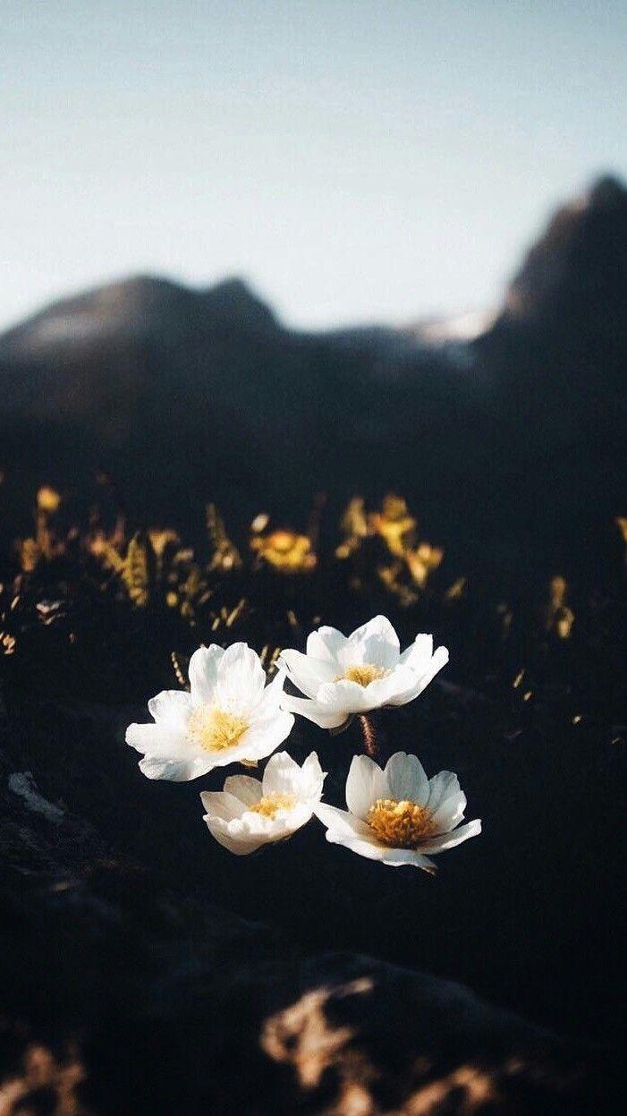 Plano de fundo- celular Paisagem/ flores | Papel de parede flores ...