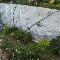 A temporary greenhouse to keep my tropicals over winter