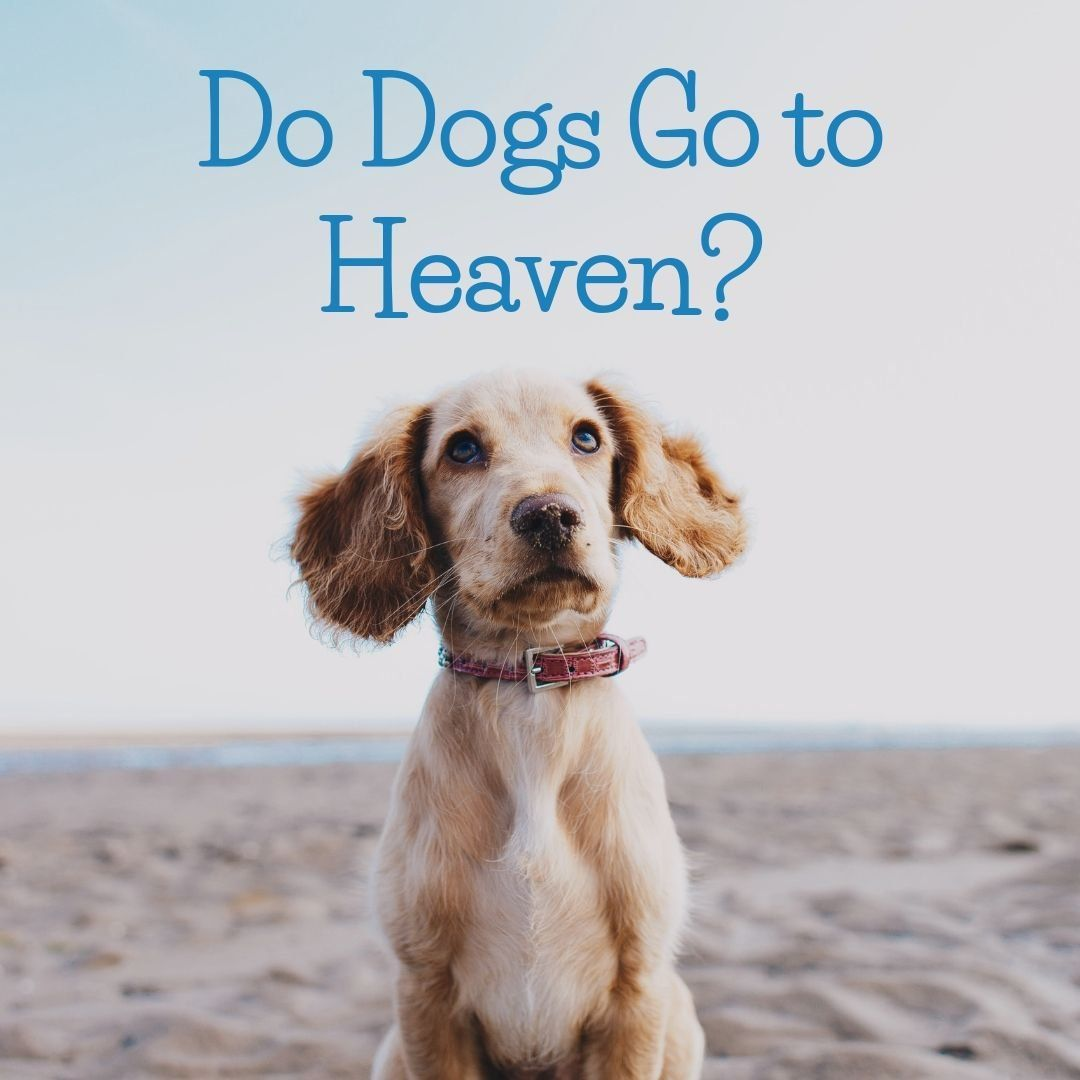 Do Dogs Go to Heaven? A Christian Perspective Dog heaven