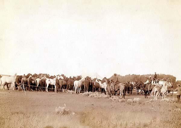 Roping Mustangs