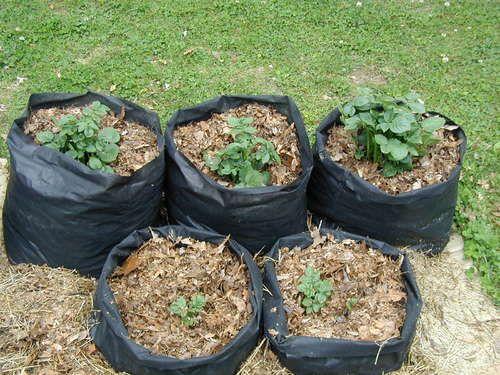 Tater Totes Potato Grow Bags Grow Bags Diy Grow Bags 400 x 300