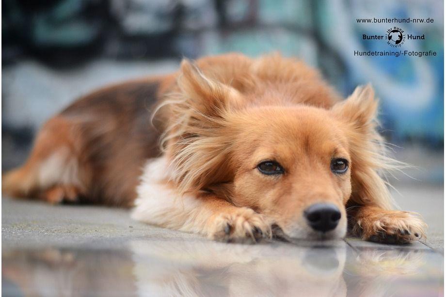 Der Null Bock Hund D Tiere Tierfotograf