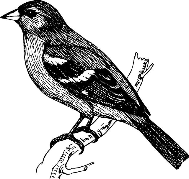 dibujos en blanco y negro png - Buscar con Google | plantillas ...
