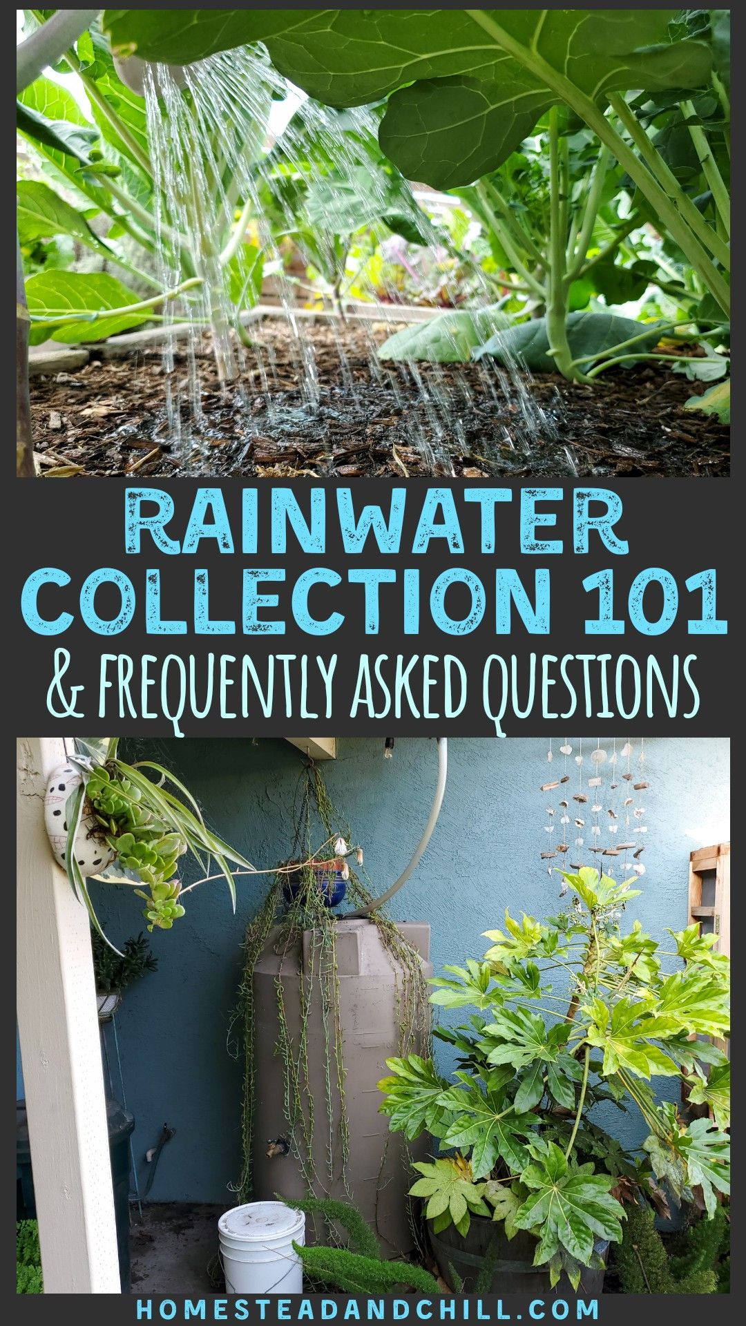 Rainwater Collection Systems 101 Faqs Homestead And Chill Rain Water Collection Rain Water Collection System Rainwater Harvesting