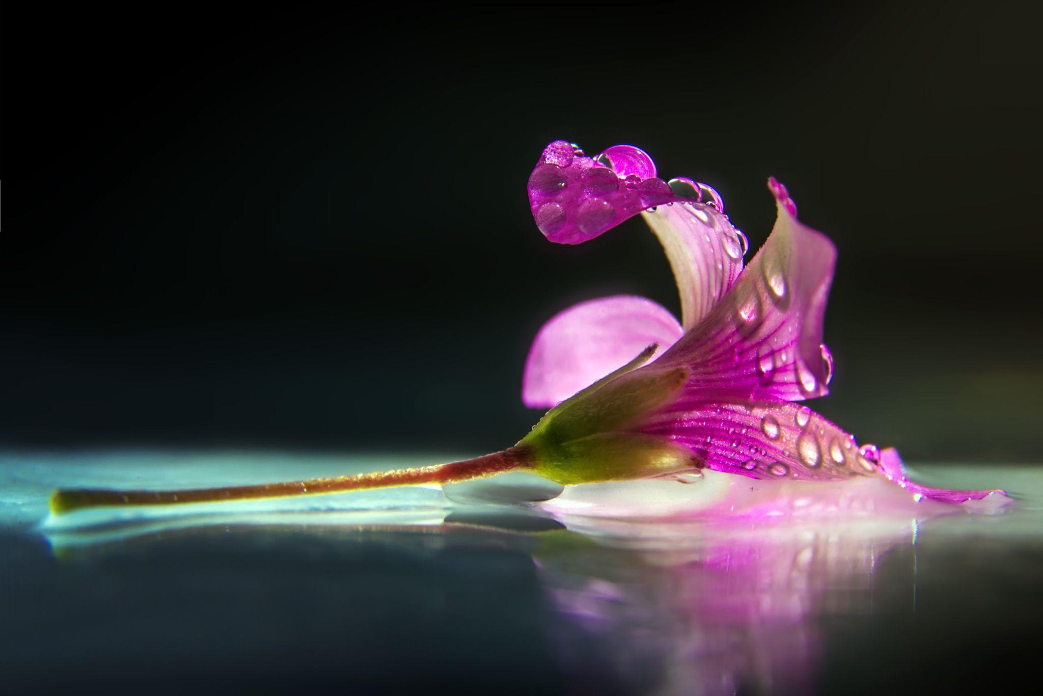 Fotografía pink por BO LED en 500px