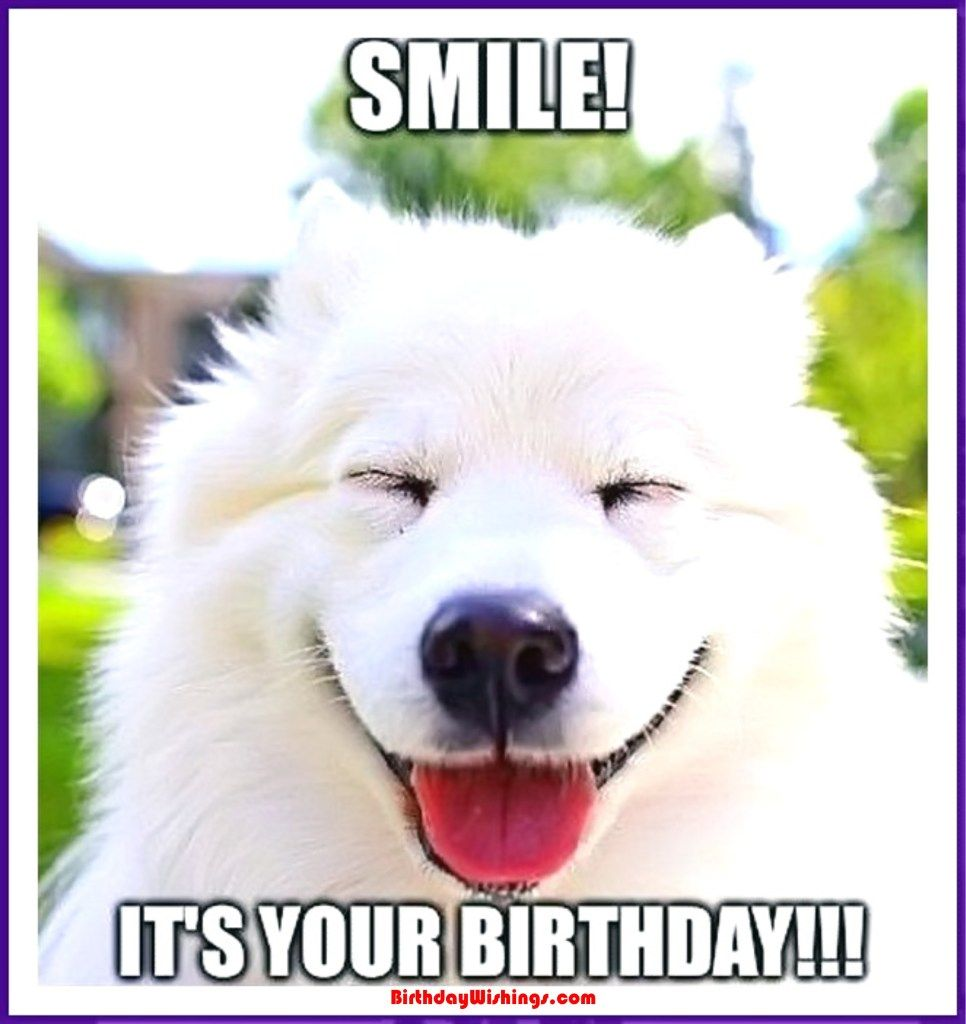 Funny Happy Birthday Memes With Cats Dogs Funny Animals Happy Birthday Dog Meme Happy Birthday Dog Samoyed Dogs