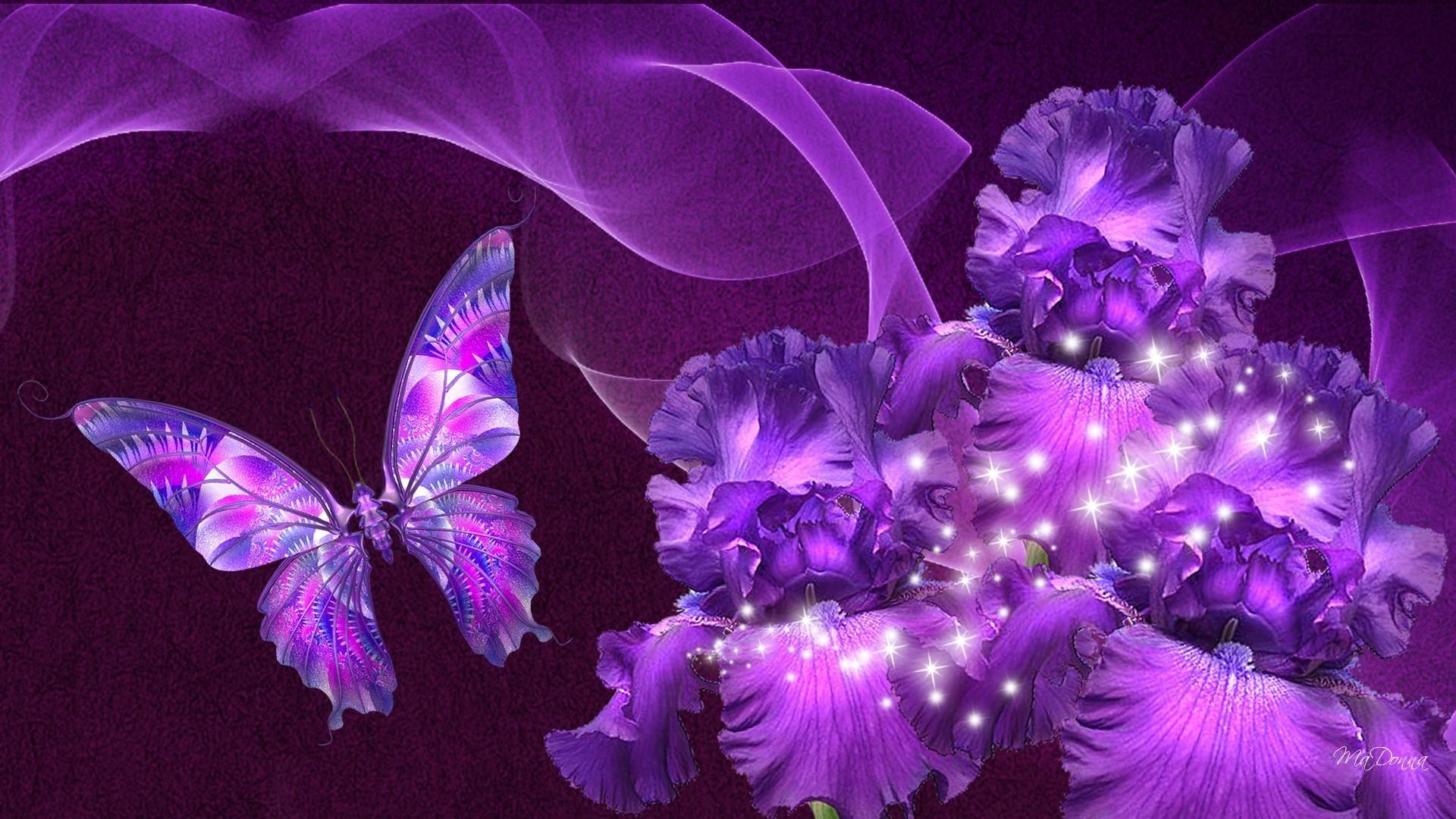 beauty_purple_butterfly_wallpaper (1920×1080)   butterflies