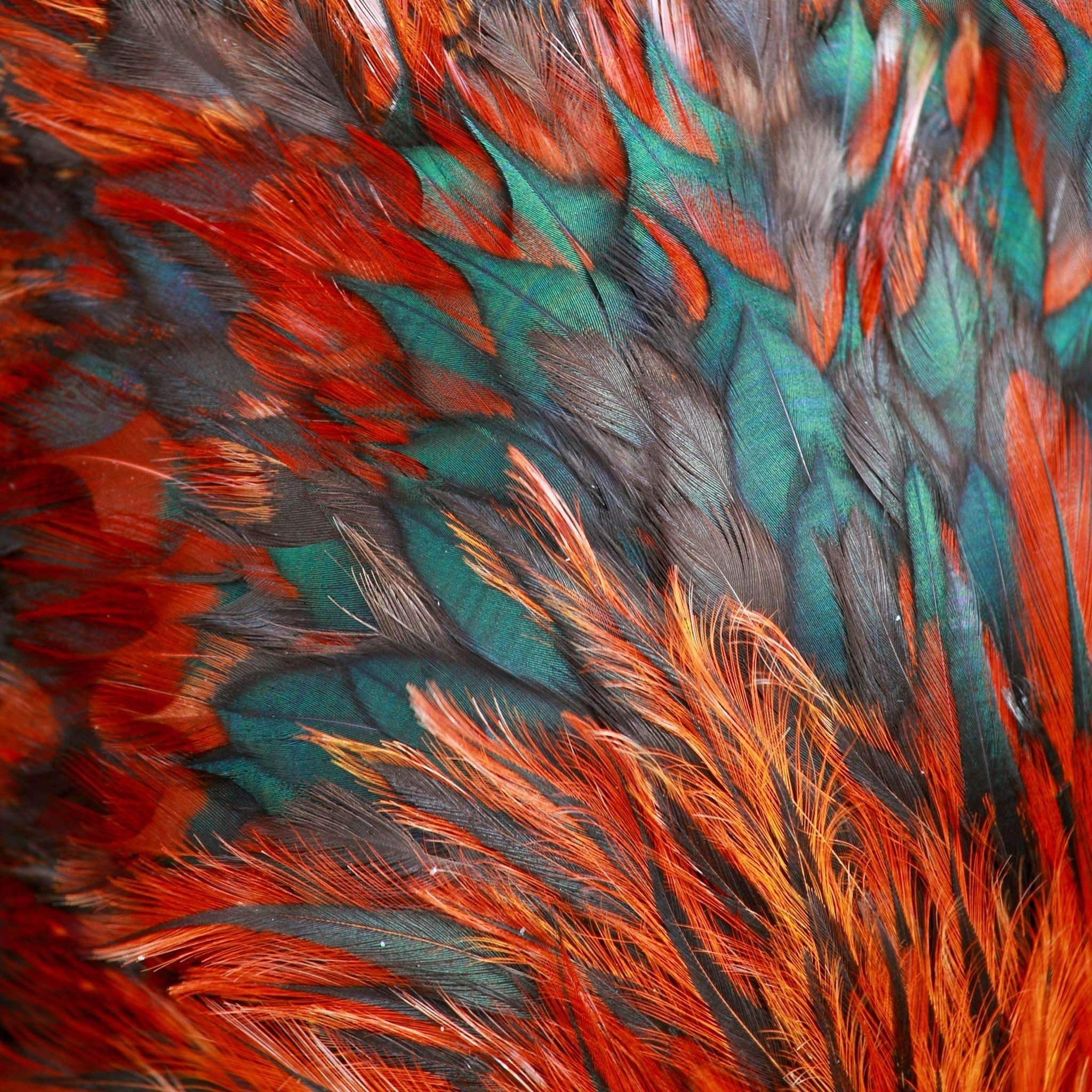 30 X 30 Bird Of A Different Feather I Color Textures Color Inspiration Art