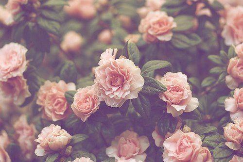 Pretty Flowers Tumblr